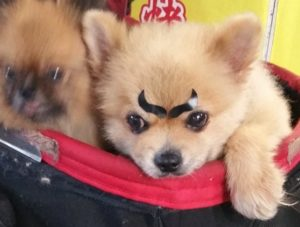 Cute dog. (c) Japanese Rule of 7