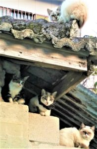 Japanese Cats - Japanese Rule of 7